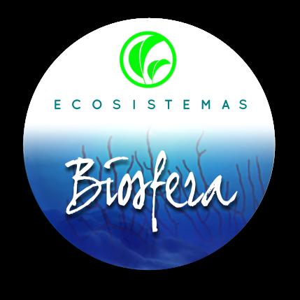 Biogarden ecosistemas biosfera la vida es un regalo - Como construir un terrario ...