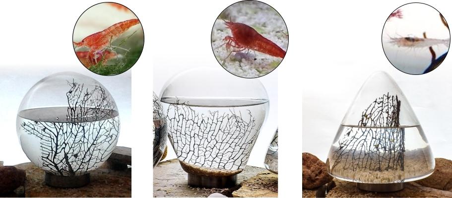 Ecosistemas autosuficientes con camarones  creado por BioGarden