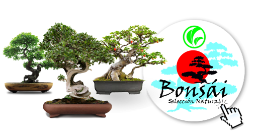 D_BONSAI_NATURAL